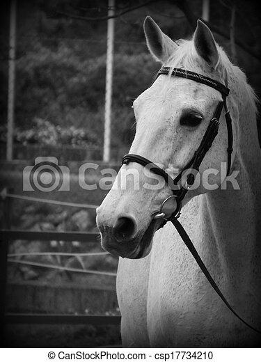 Lusitano horse head csp17734210