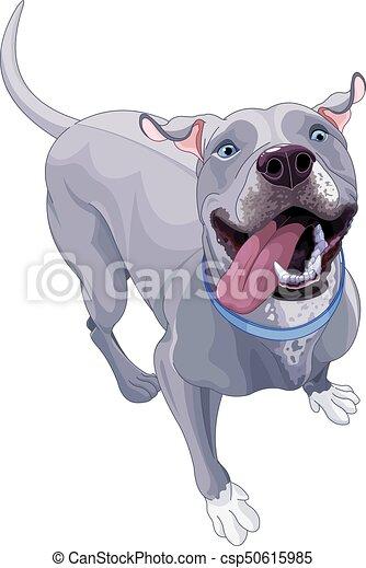 Komischer Pitbullhund - csp50615985