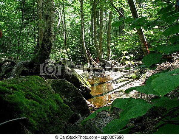 luxuriante, floresta - csp0087698