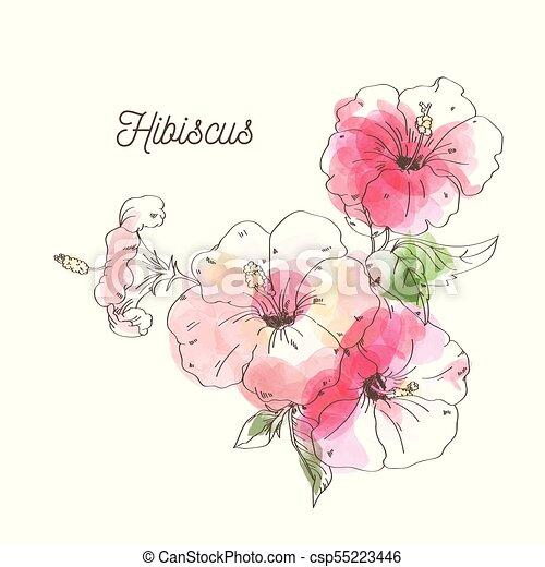 Luxury Hibiscus Flower On White Background