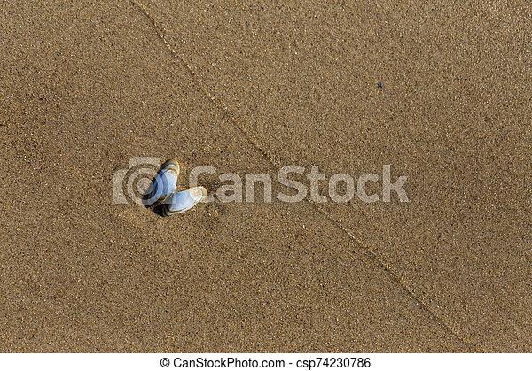 luz, arena, azul, mojado, pequeño, concha marina - csp74230786