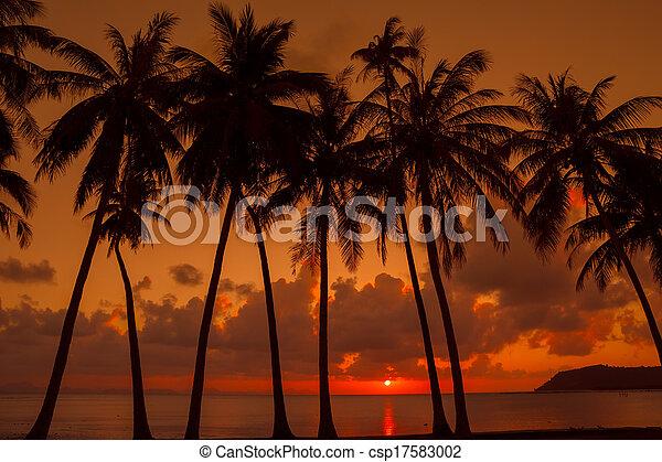 Palmeras en la playa al atardecer - csp17583002