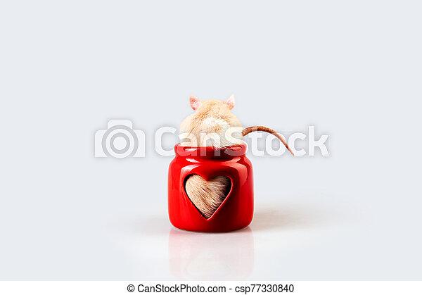 luz, rata, beige, sentado, candelero, ventana, rojo, en forma de corazón - csp77330840