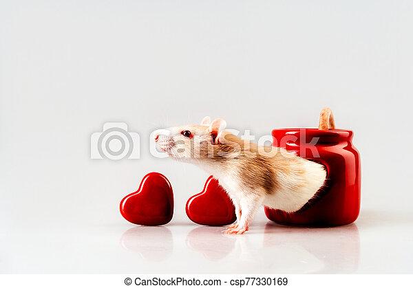 luz, rata, beige, sentado, candelero, ventana, rojo, en forma de corazón - csp77330169