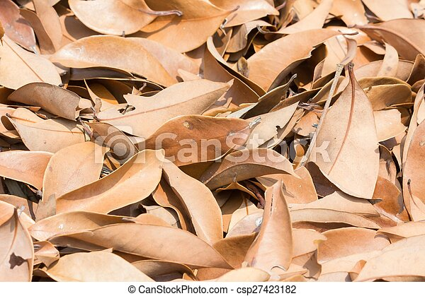 lychee, feuille brune, arbre - csp27423182