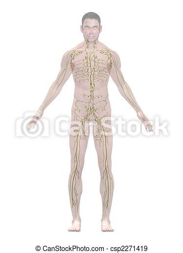 lymphatic system - csp2271419