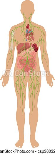 Lymphatic system in human body - csp38032364