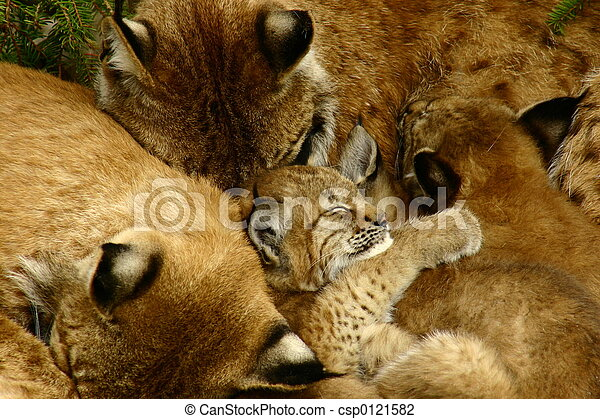 Lynx Family - csp0121582