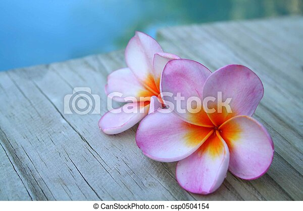 lyserød blomstrer - csp0504154