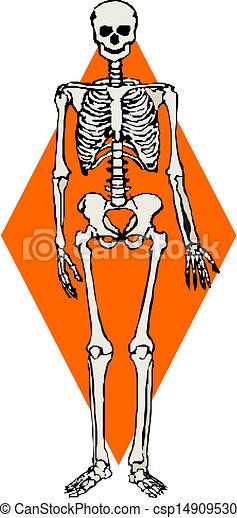 mänsklig skeleton, vektor - csp14909530