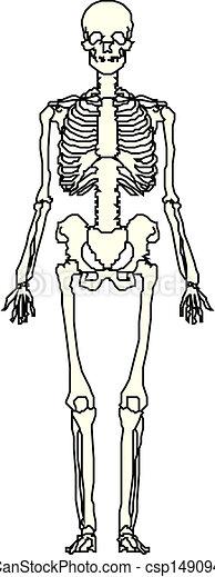mänsklig skeleton, vektor - csp14909499
