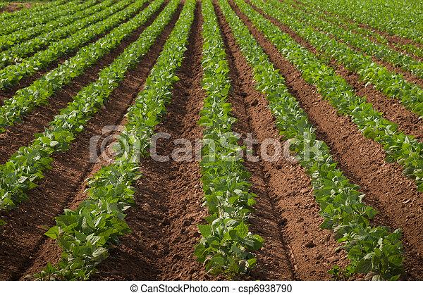 mængder, landbrugs-, land, række - csp6938790