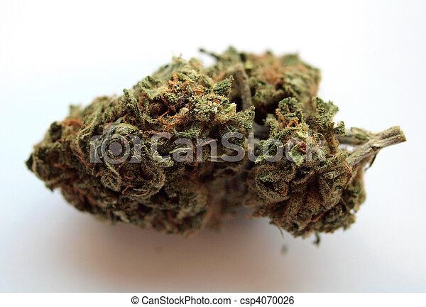 médico, marijuana, kimber - csp4070026