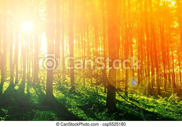 místico, coloridos, sol, manhã, floresta, raio - csp5525180