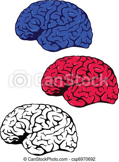 mózg, ludzki - csp6970692
