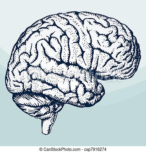 mózg, ludzki - csp7916274