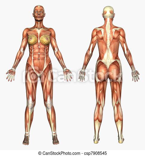 músculos, femininas - csp7908545