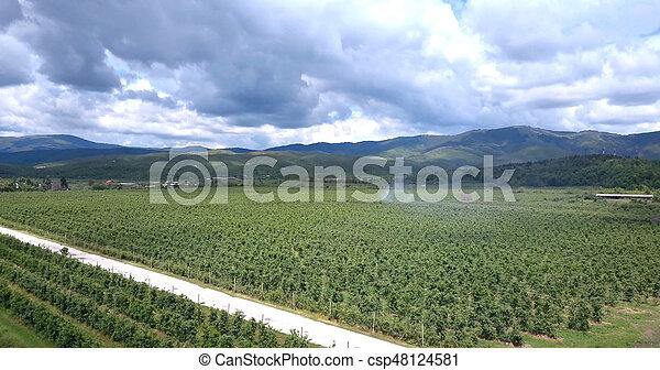 maçã, pomares, vista, , prespa - csp48124581