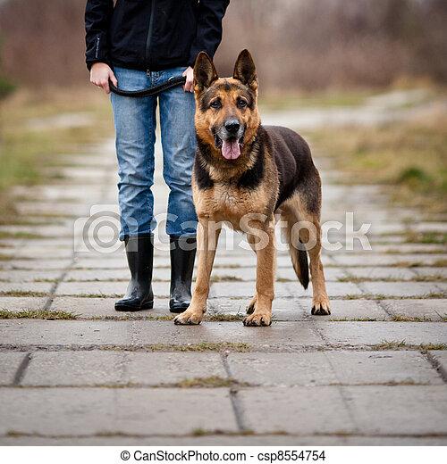 maître, obéissant, chien, elle - csp8554754