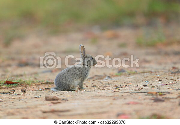 mały, łąka, królik, młody - csp32293870