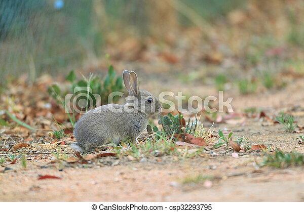 mały, łąka, królik, młody - csp32293795