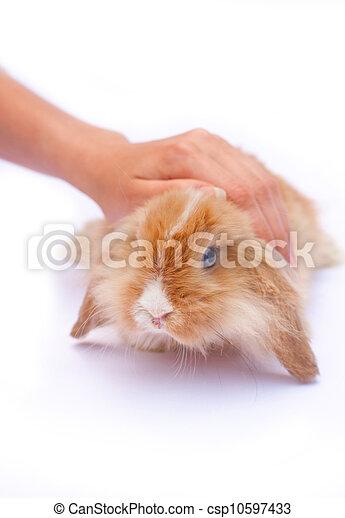 mały, króliki, siła robocza - csp10597433