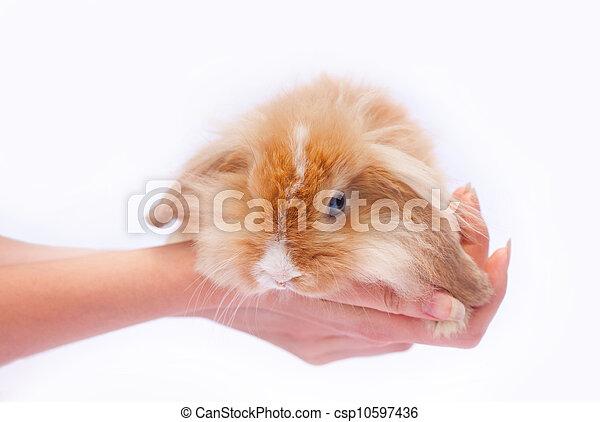 mały, króliki, siła robocza - csp10597436