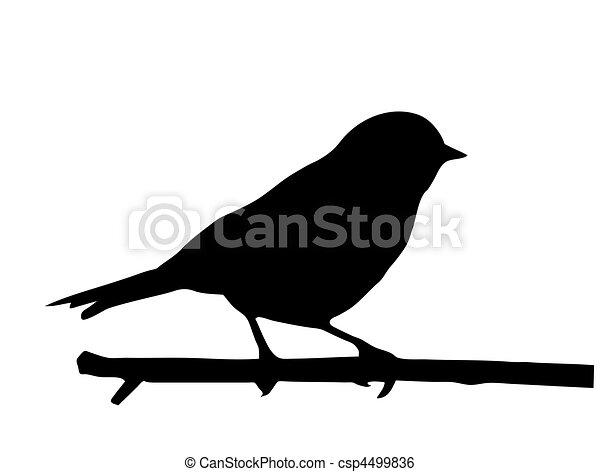 mały, wektor, sylwetka, ptak, gałąź - csp4499836