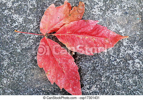 mable, folha, road., vermelho - csp17301431