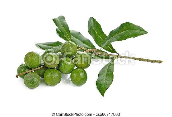macadamia nuts on white background - csp60717063