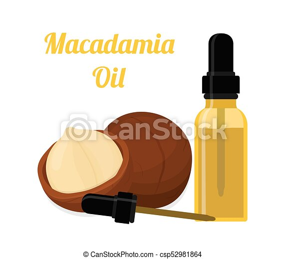 Macadamia oil, essence, perfume, cosmetics. Cartoon flat style. Vector illustration - csp52981864