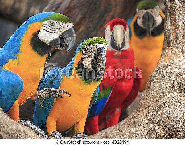 macaw bird sitting on the perch - csp14320494