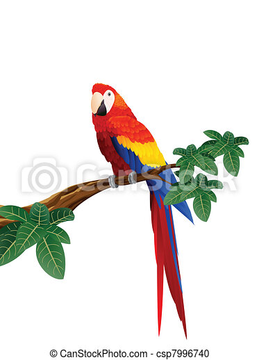 macaw bird vector illustration of macaw bird rh canstockphoto com macaw clipart black and white macaw clipart free