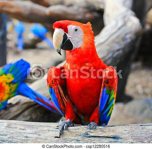 macaw, bunte - csp12280516