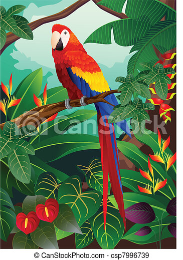 macaw, oiseau - csp7996739