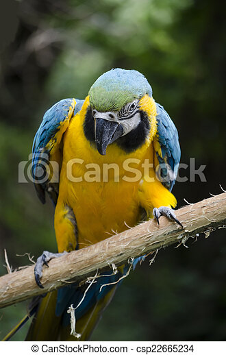 Macaw on a Branch - csp22665234