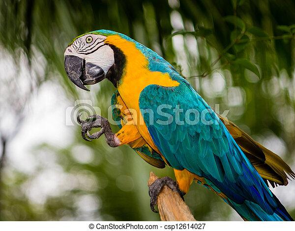 macaw, papegaai - csp12614027