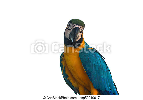 Macaw Parrot on white background - csp50910017