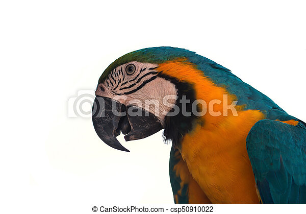 Macaw Parrot on white background - csp50910022
