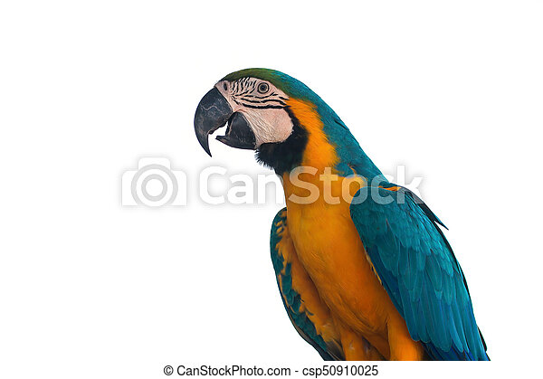 Macaw Parrot on white background - csp50910025