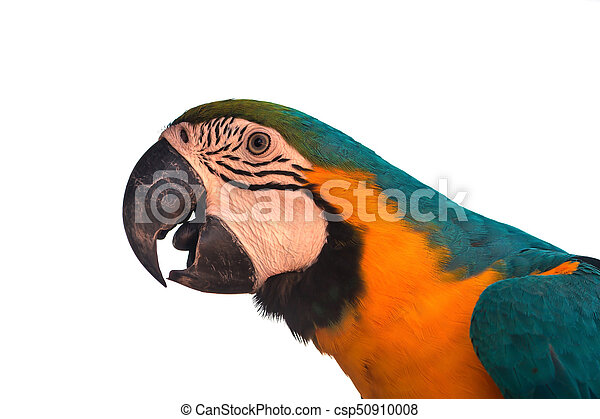 Macaw Parrot on white background - csp50910008