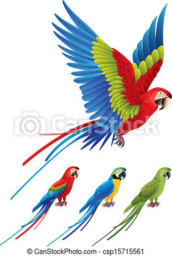 macaw parrot spread wings and tree sitting aras macaw clip art rh canstockphoto com macaw parrot clipart macaw parrot clipart