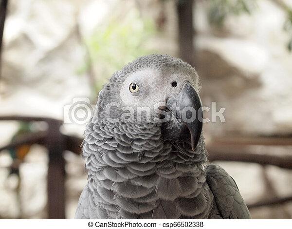 Macaw parrot - csp66502338