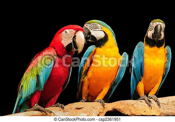 Macaws - csp2361951