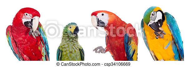 Macaws set on white background - csp34106669