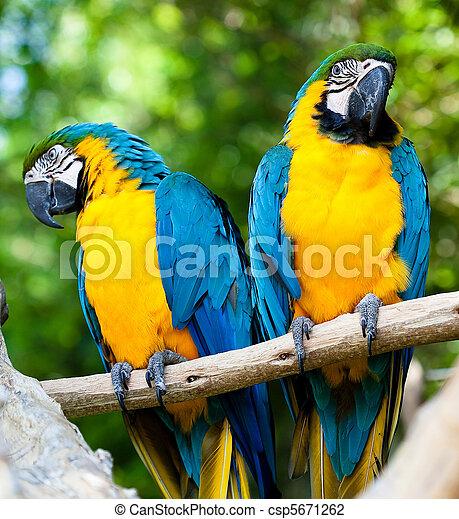macaws - csp5671262
