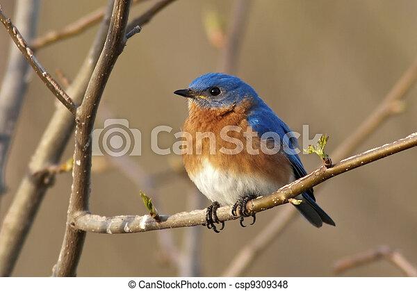Hombre azul oriental - csp9309348