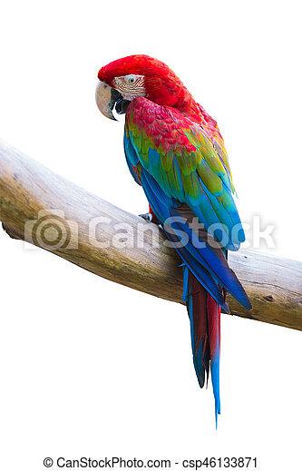 macow bird - csp46133871
