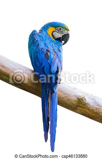 macow bird - csp46133880