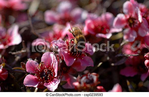 Macro Bee on Red Flower Shrub - csp0239593